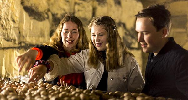 champignonkwekerij 2 (003)